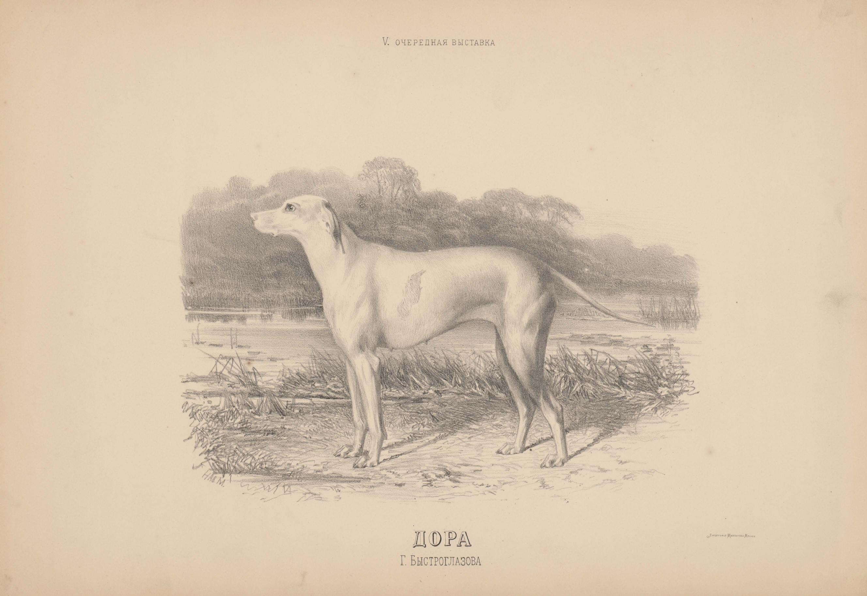 05. Портреты собак Подружейные