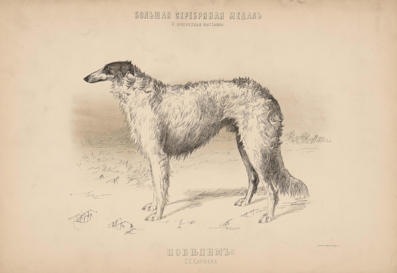 07. Портреты собак Подружейные