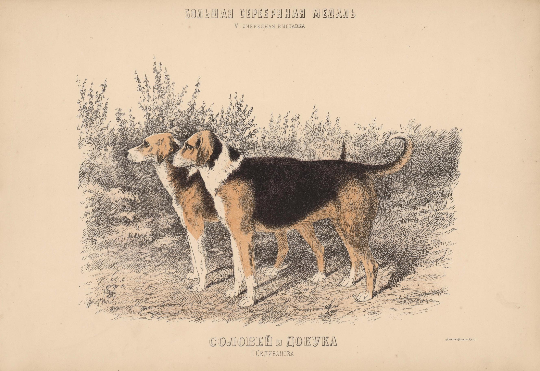 10. Портреты собак  гончие