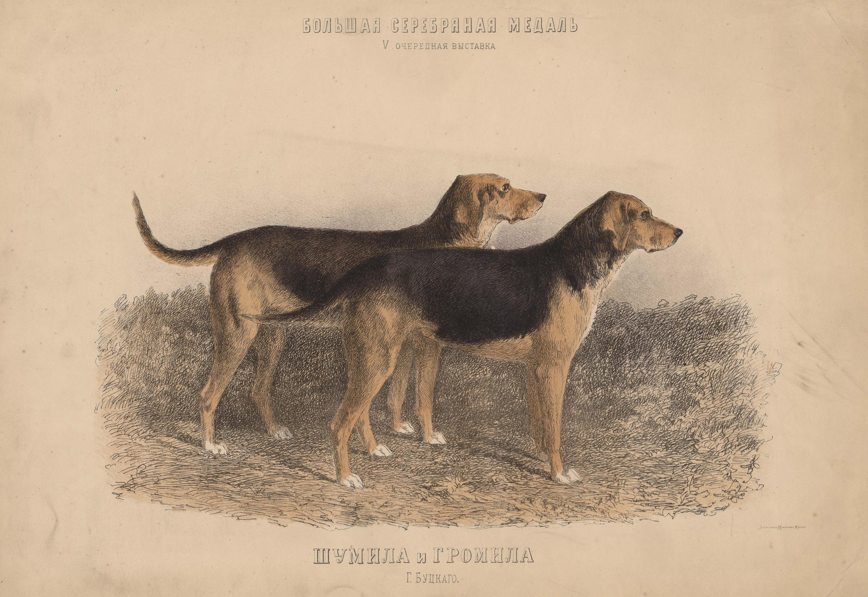 11. Портреты собак  гончие