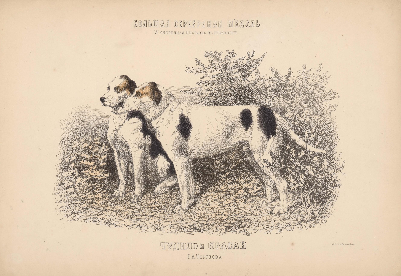 12. Портреты собак  гончие