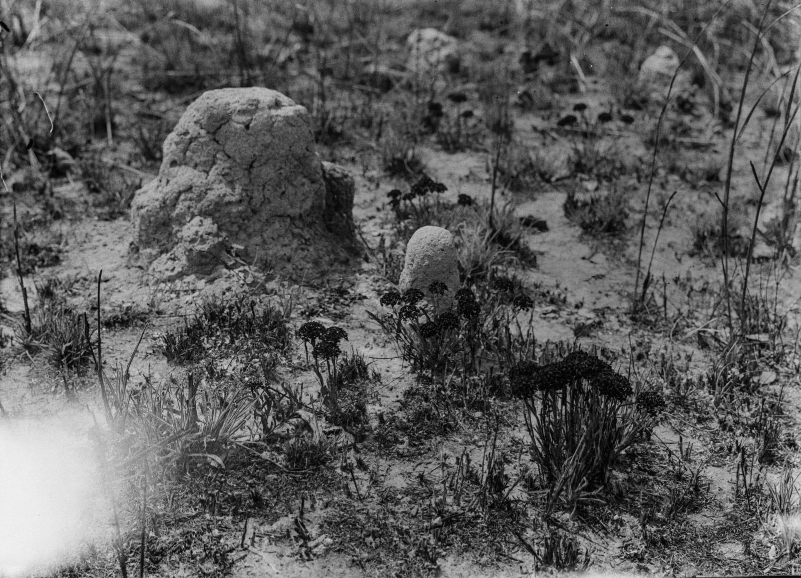 Касемпа. Маленькие термитники в сгоревшем дамбо. Цветковые растения появятся через несколько дней после пожара