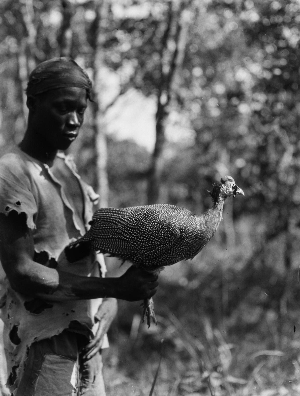 Касемпа. Анголец держит цесарку
