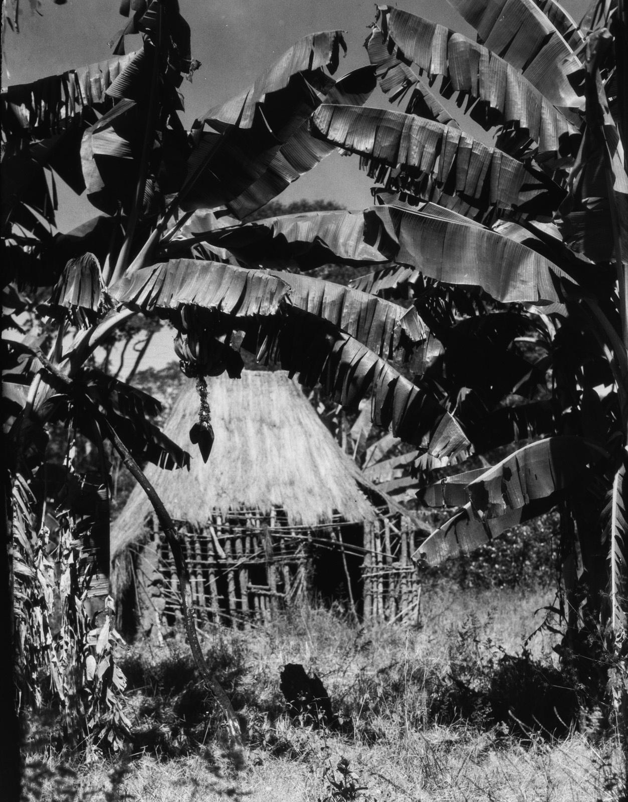 Канколонкола. Заброшенная деревня