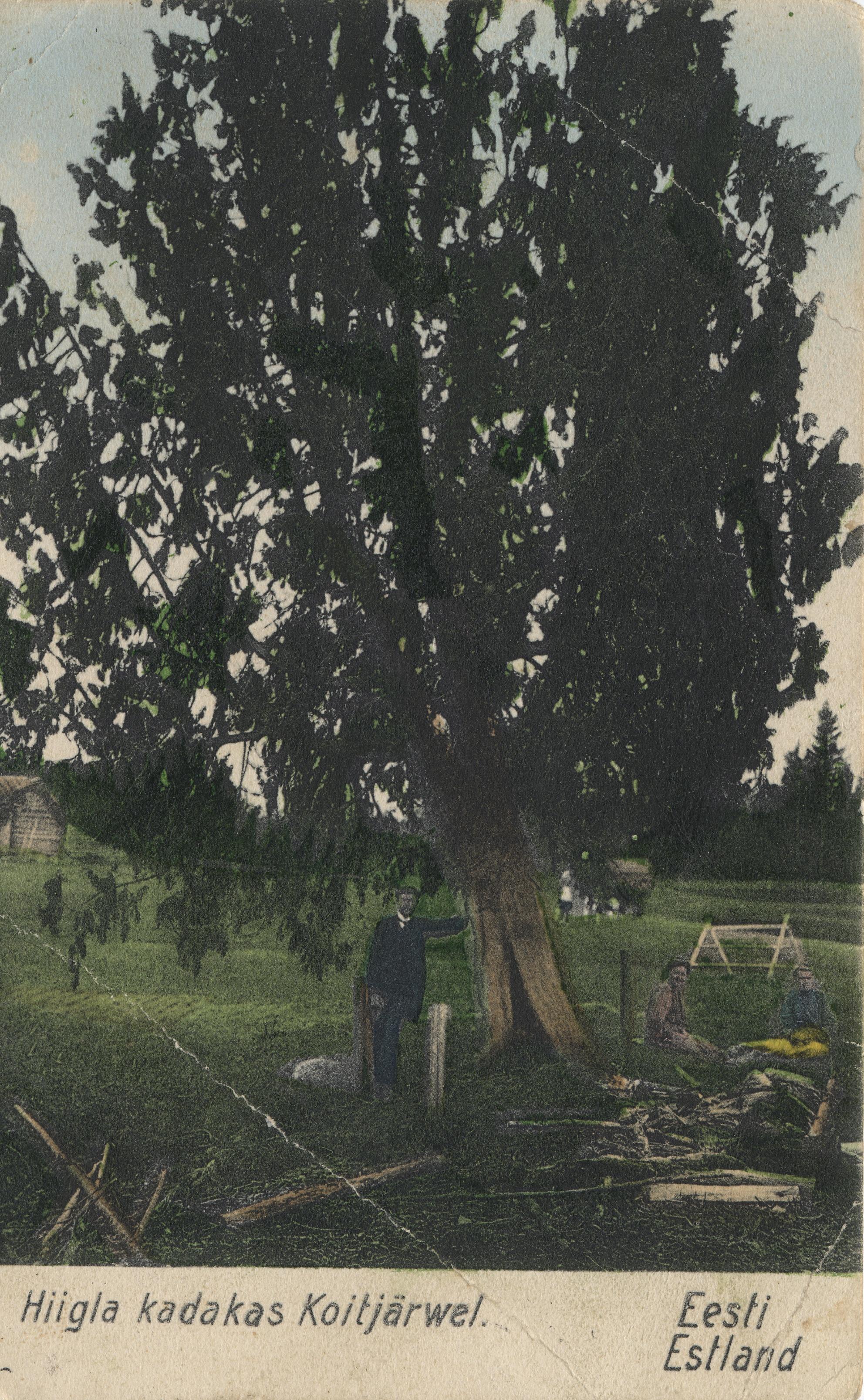 Окрестности Ревеля. Койтъярве (1)