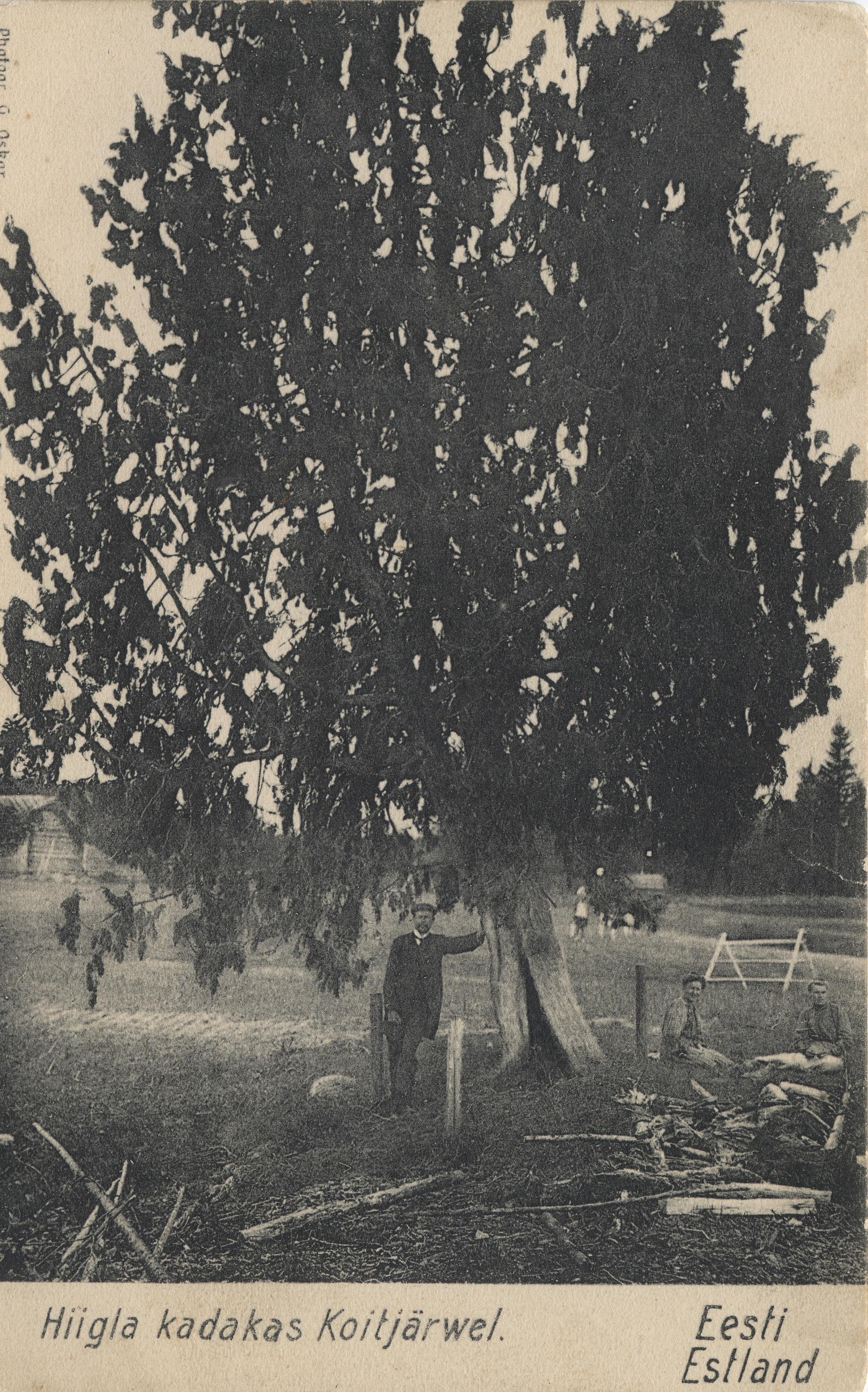 Окрестности Ревеля. Койтъярве (2)