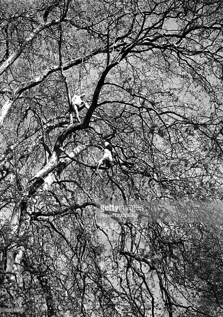 1946. Люди забрались на дерево в Меулане