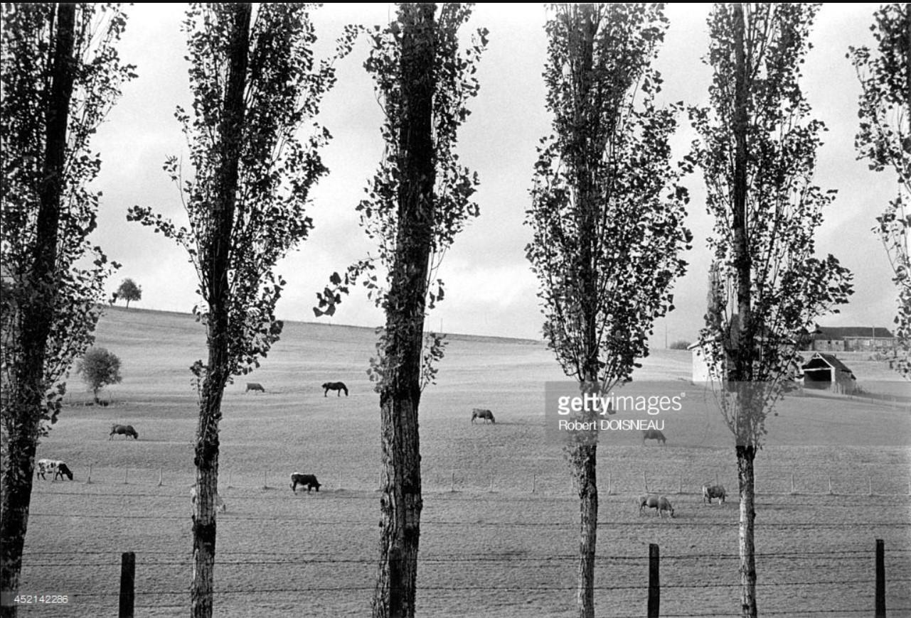 1964. Пейзаж Корреза летом