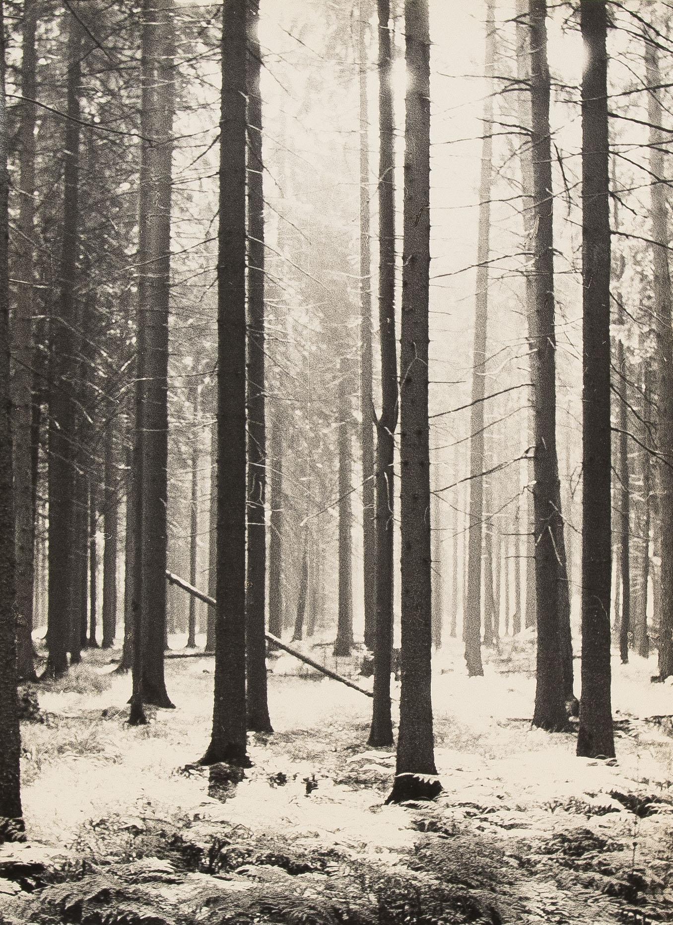 1960-е. Комовский А.Г. «Солнце в лесу»