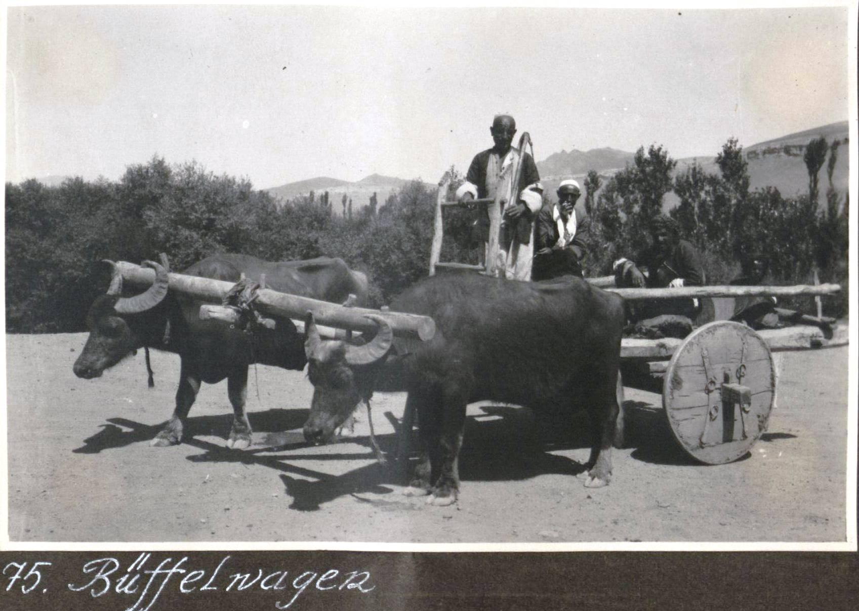 48. Курдистан