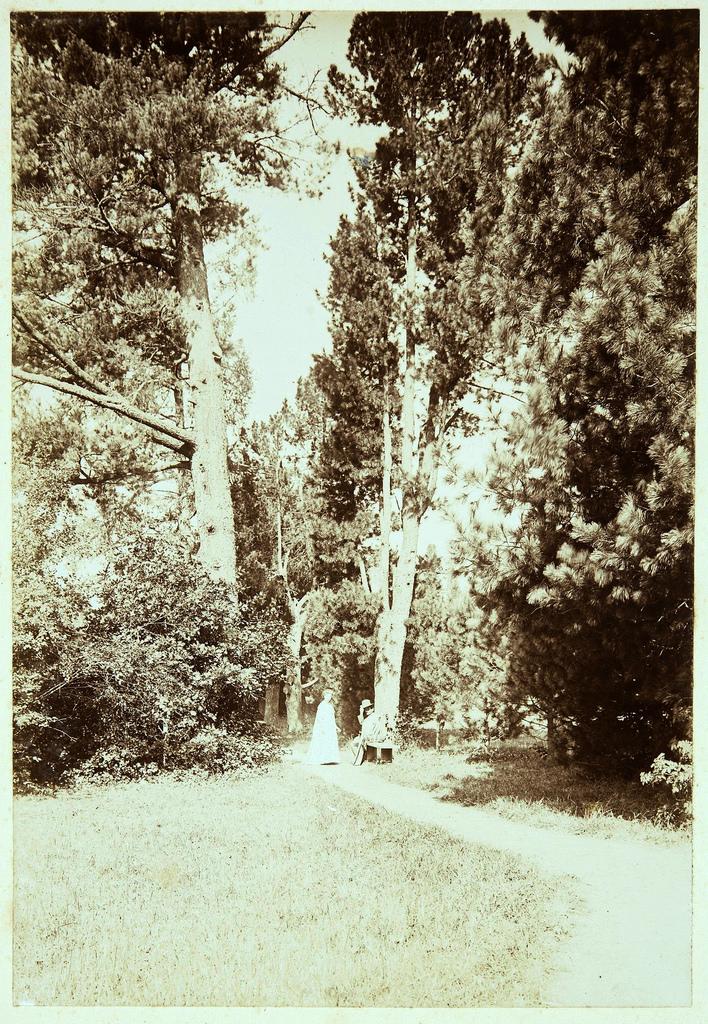 «Дикая» часть парка