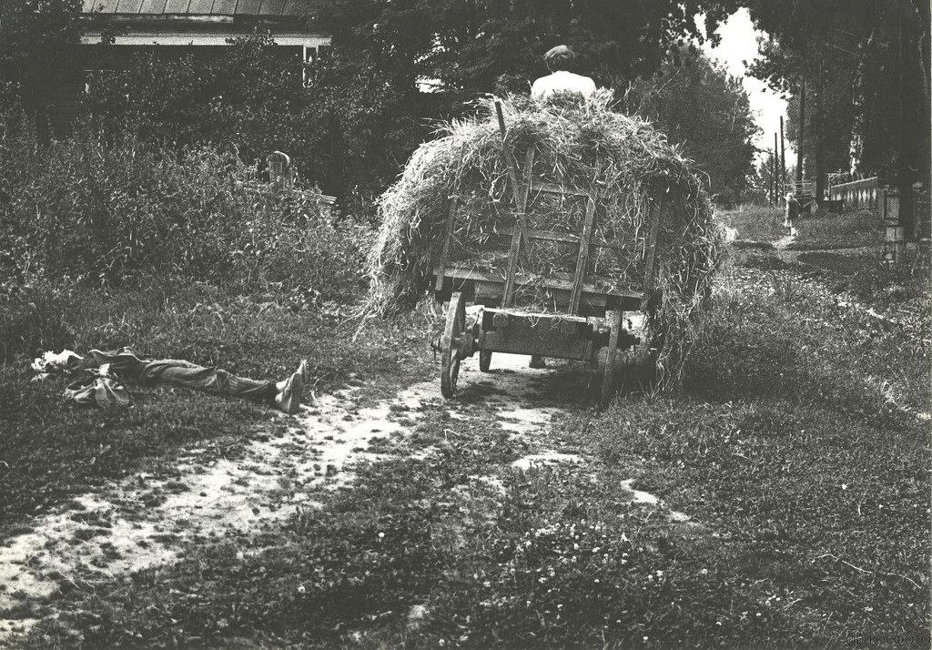1983. Сенокос