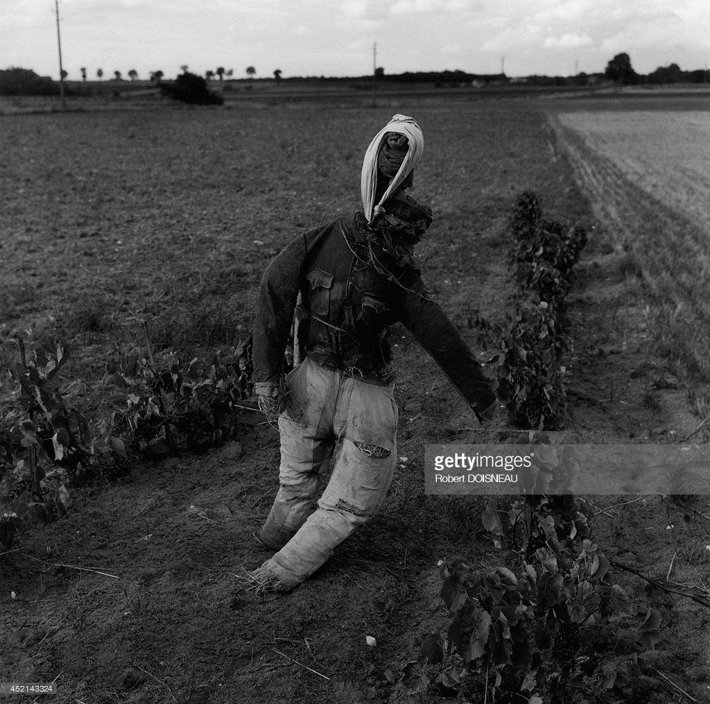 1964. Чучело в регионе Боуз