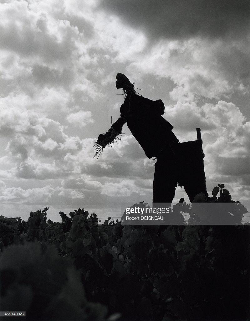 1964. Пугало  в регионе Боуз. Сентябрь