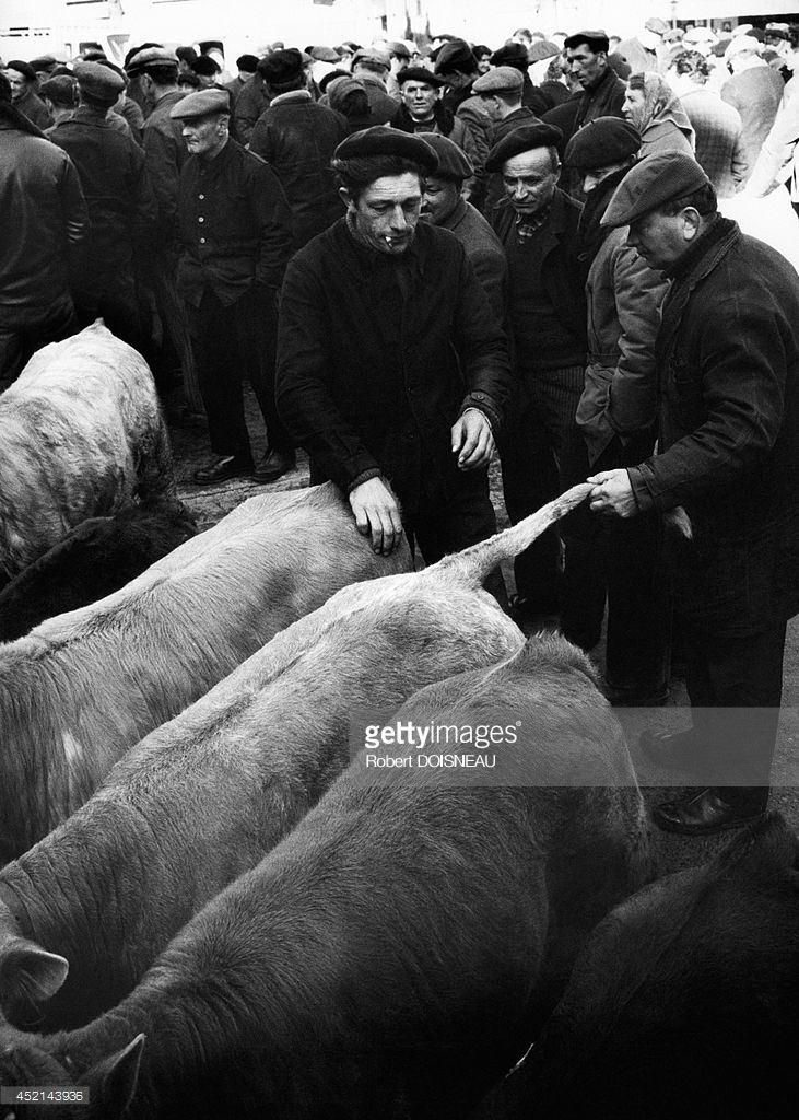 1966. Рынок телят  в Лангеаке. 28 марта