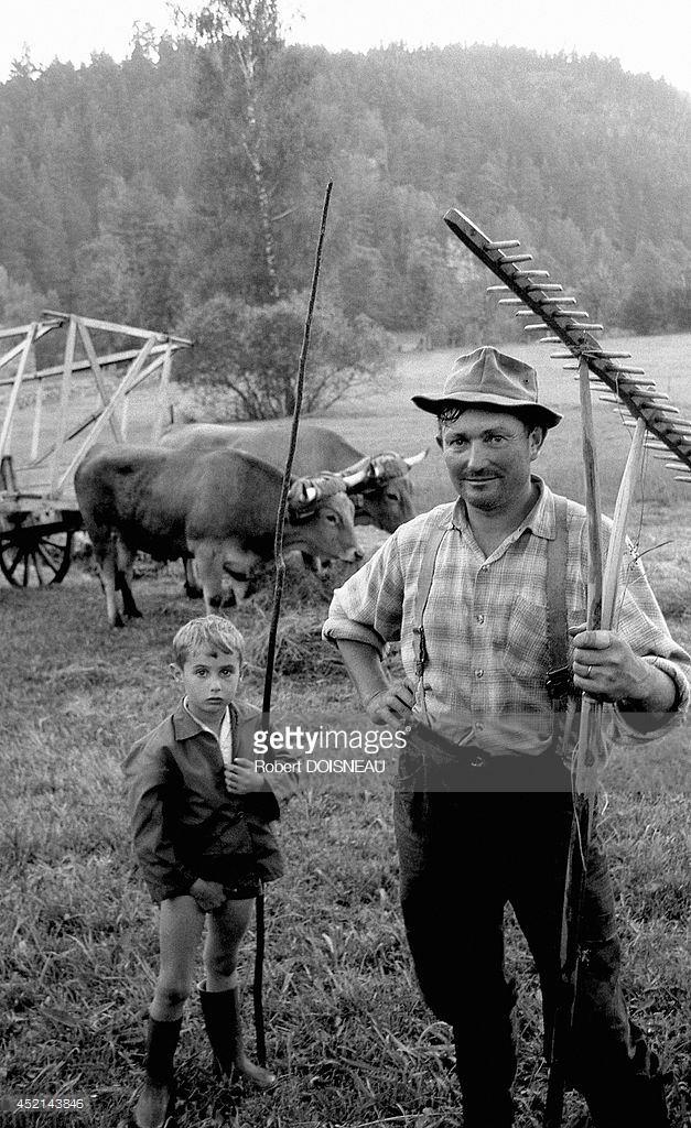 1969. Фермер во время сенокоса возле Лаваль-Аггер. Август