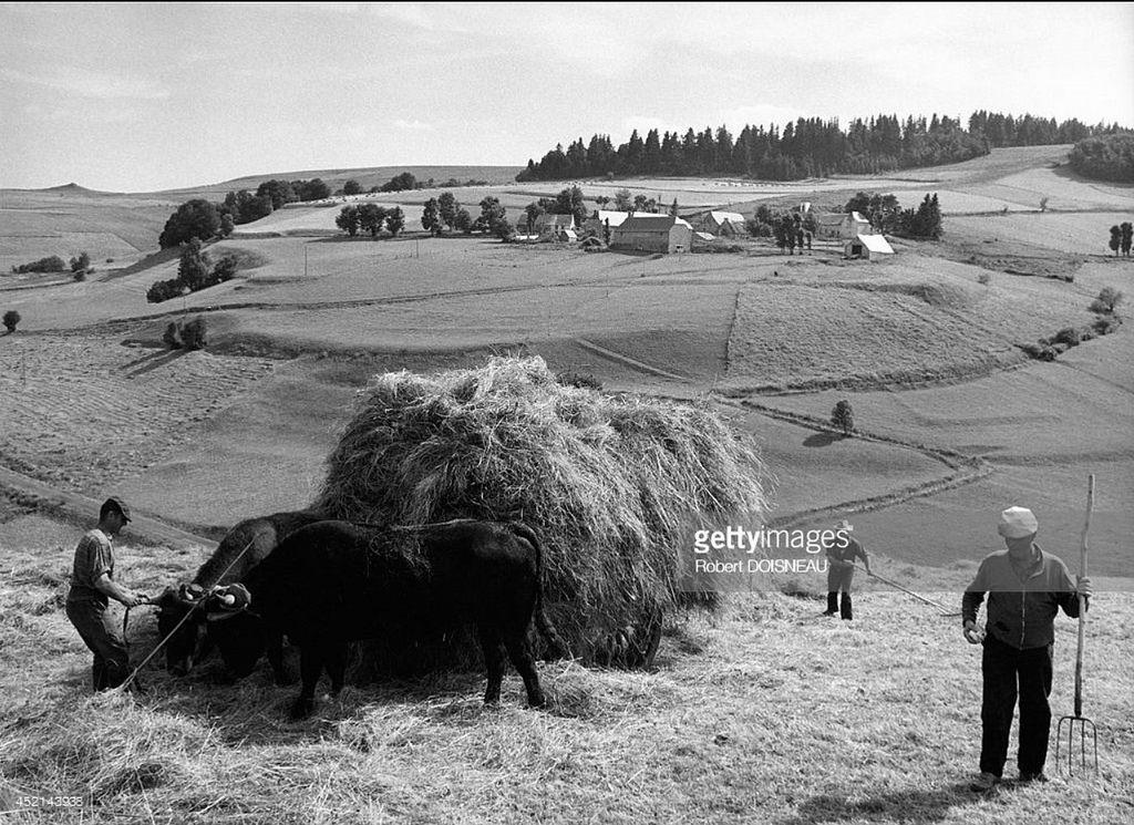 1972. Телега для перевозки сена у дороги D39 в Вин-Хауте. Август