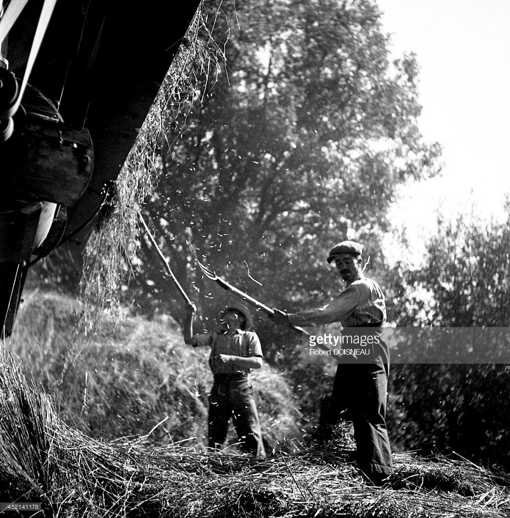 1943. Жатва  в Сен-Соване1.jpg