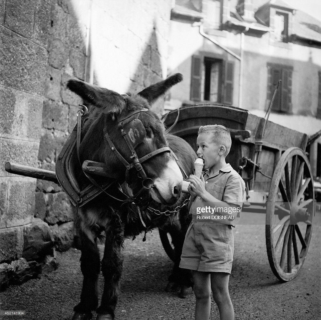 1955. Маленький мальчик ест мороженое рядом с ослом. Коррез.jpg