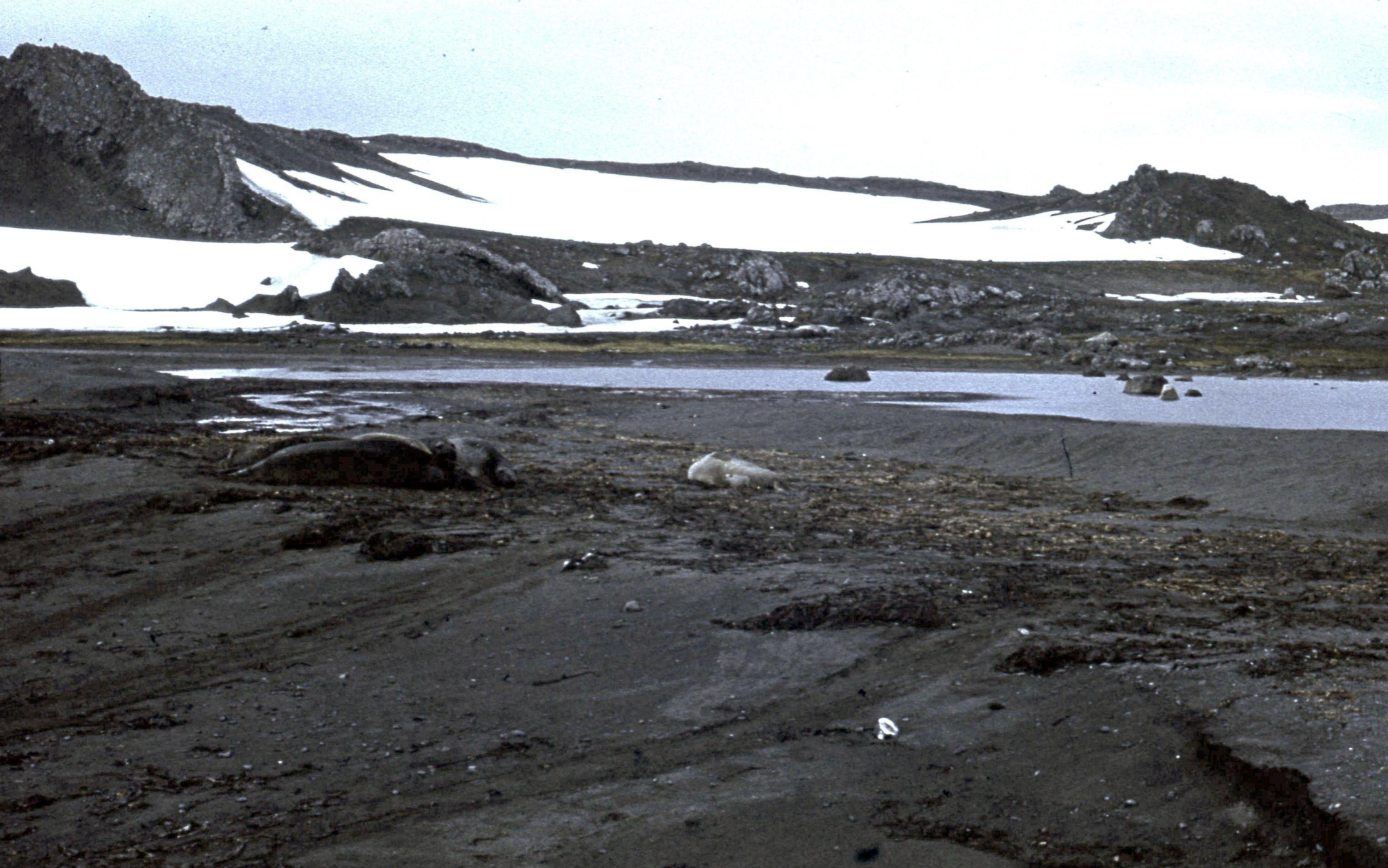 829763 Антарктическая станция _Молодёжная_.jpg