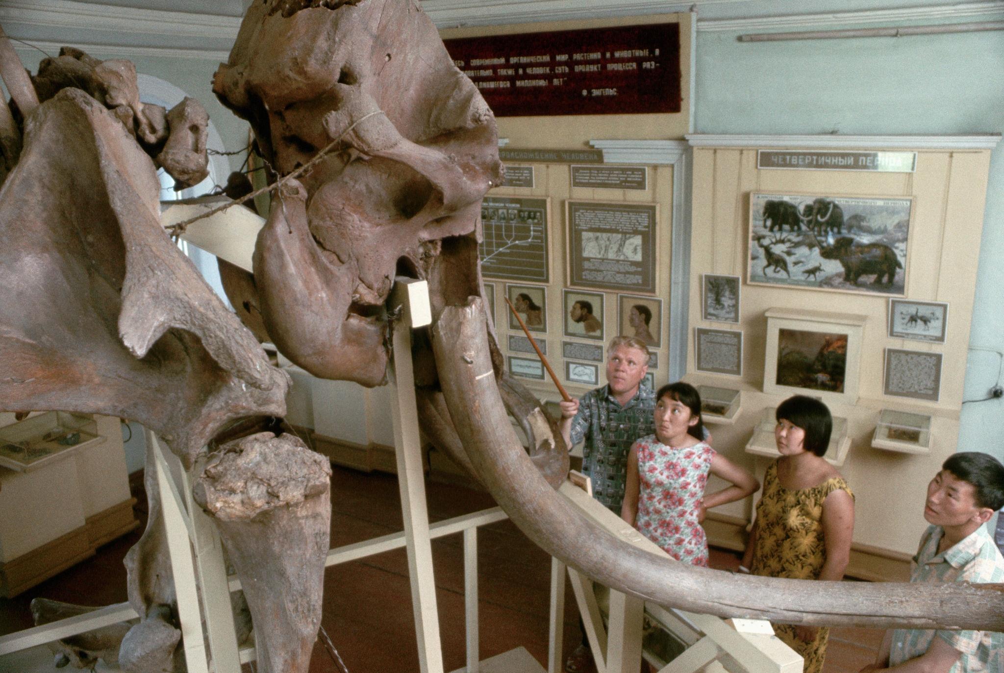 Скелет мамонта в Якутском музее.jpg