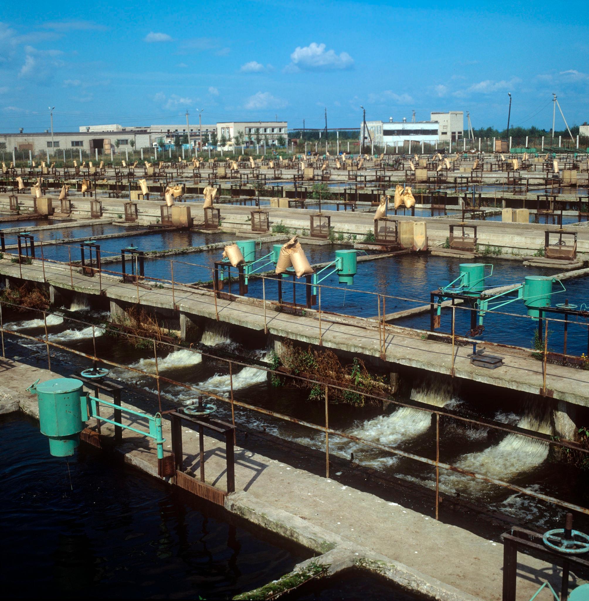 Большеченское рыбоводное хозяйство использует воду ТЭЦ, здесь выращивают карпа, форель, осетра