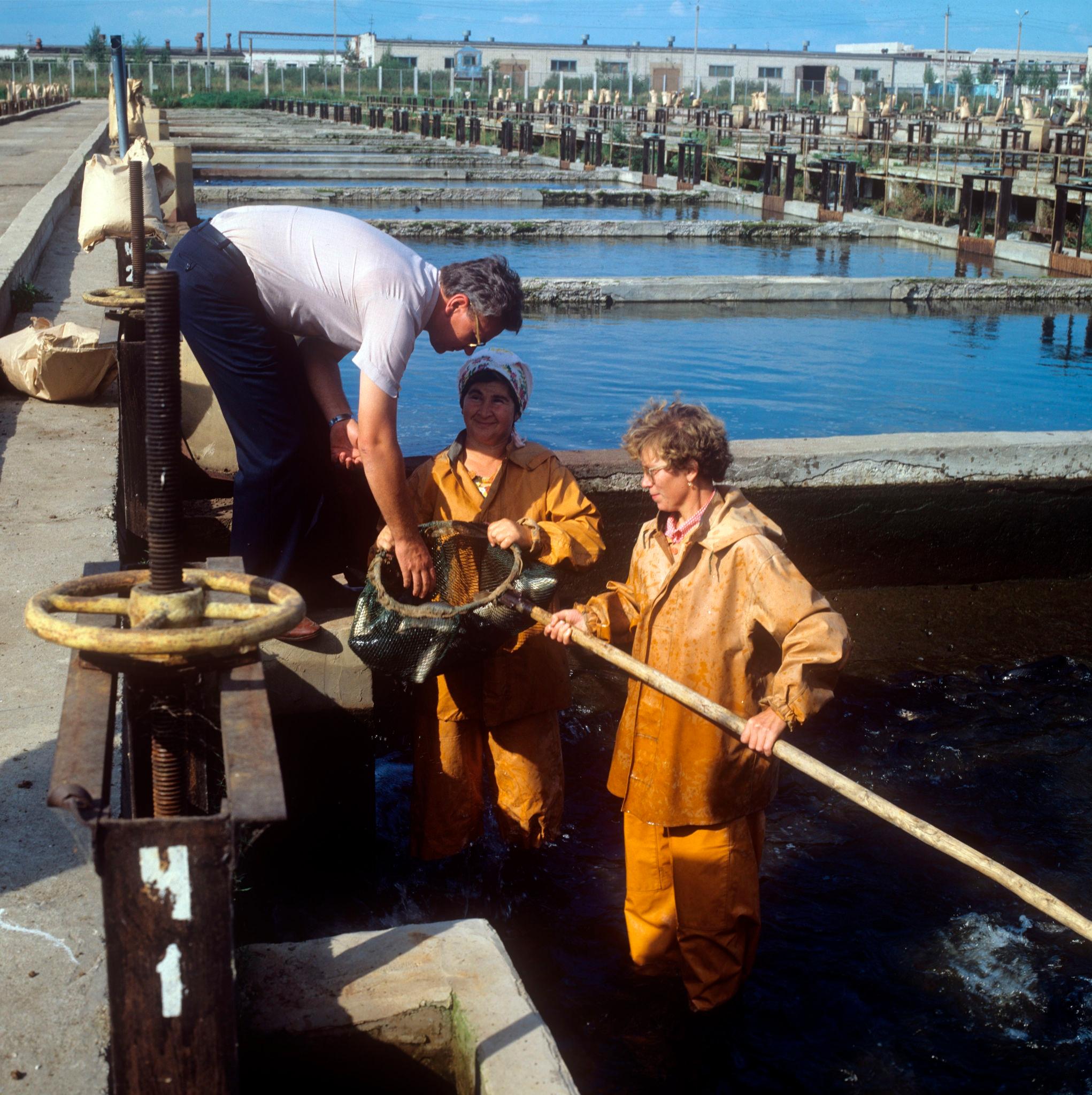 Большеченское рыбозаводное хозяйство использует воду ТЭЦ, здесь выращивают карпа, форель, осетра