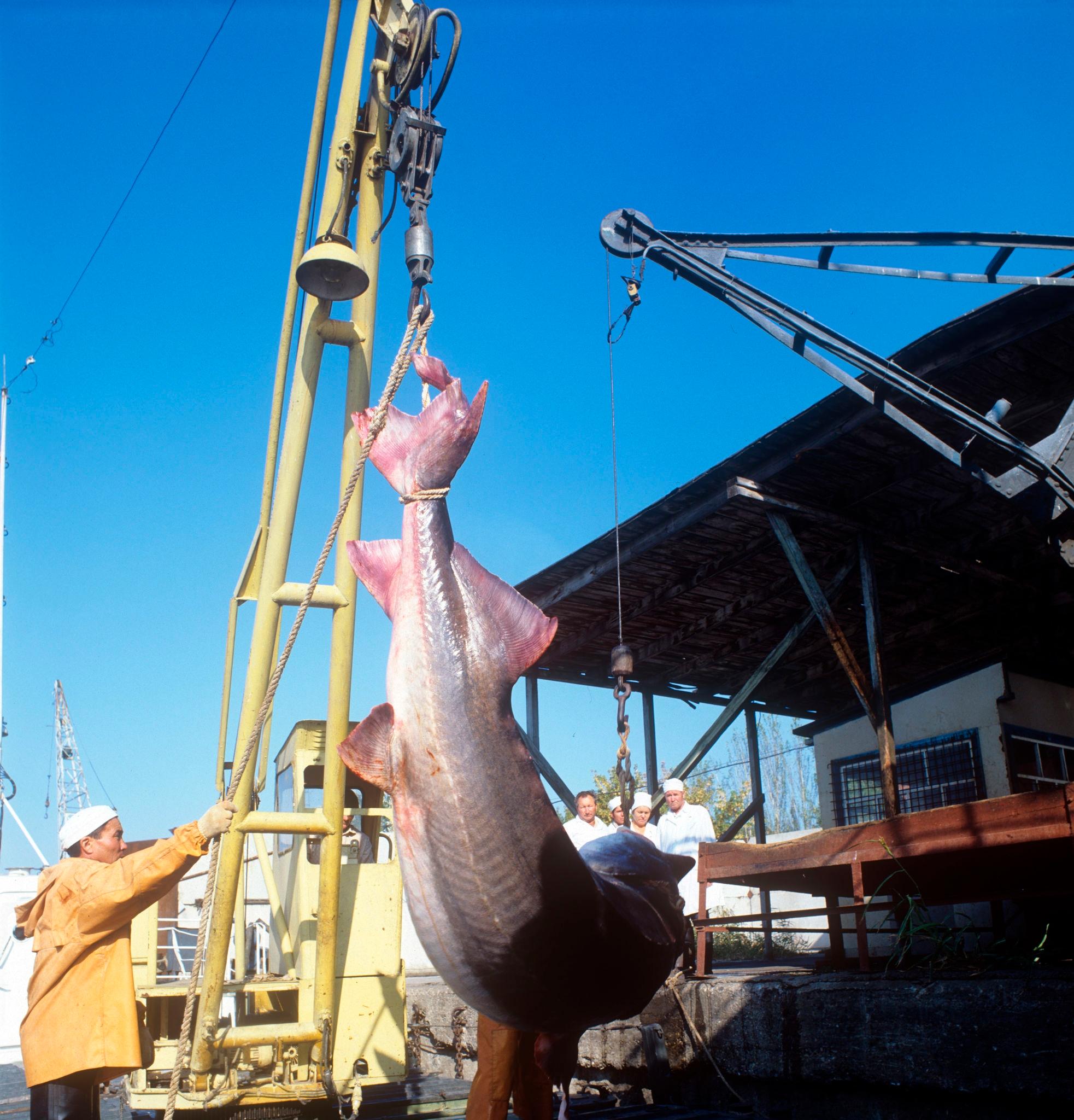 Большеченское рыбозаводное хозяйство