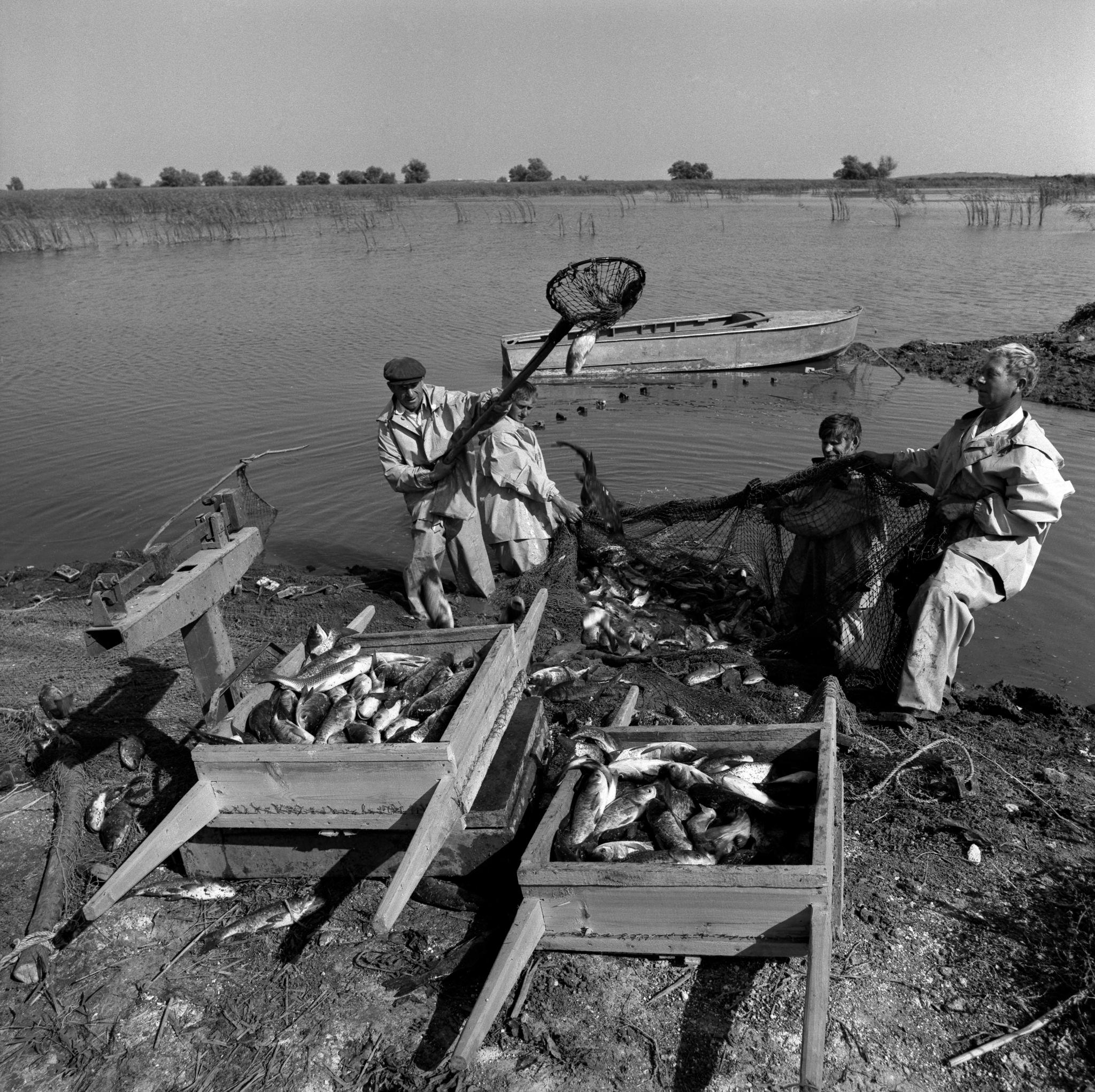 Камызякское рыбоводческое хозяйство