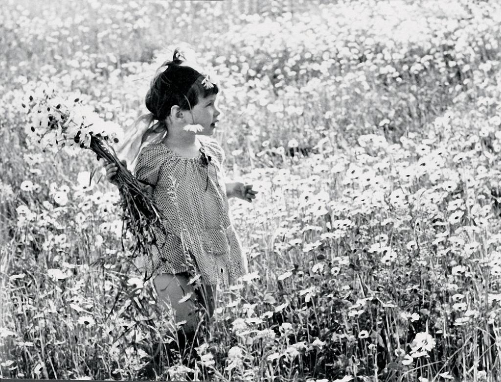 Ромашковое поле на Николиной горе
