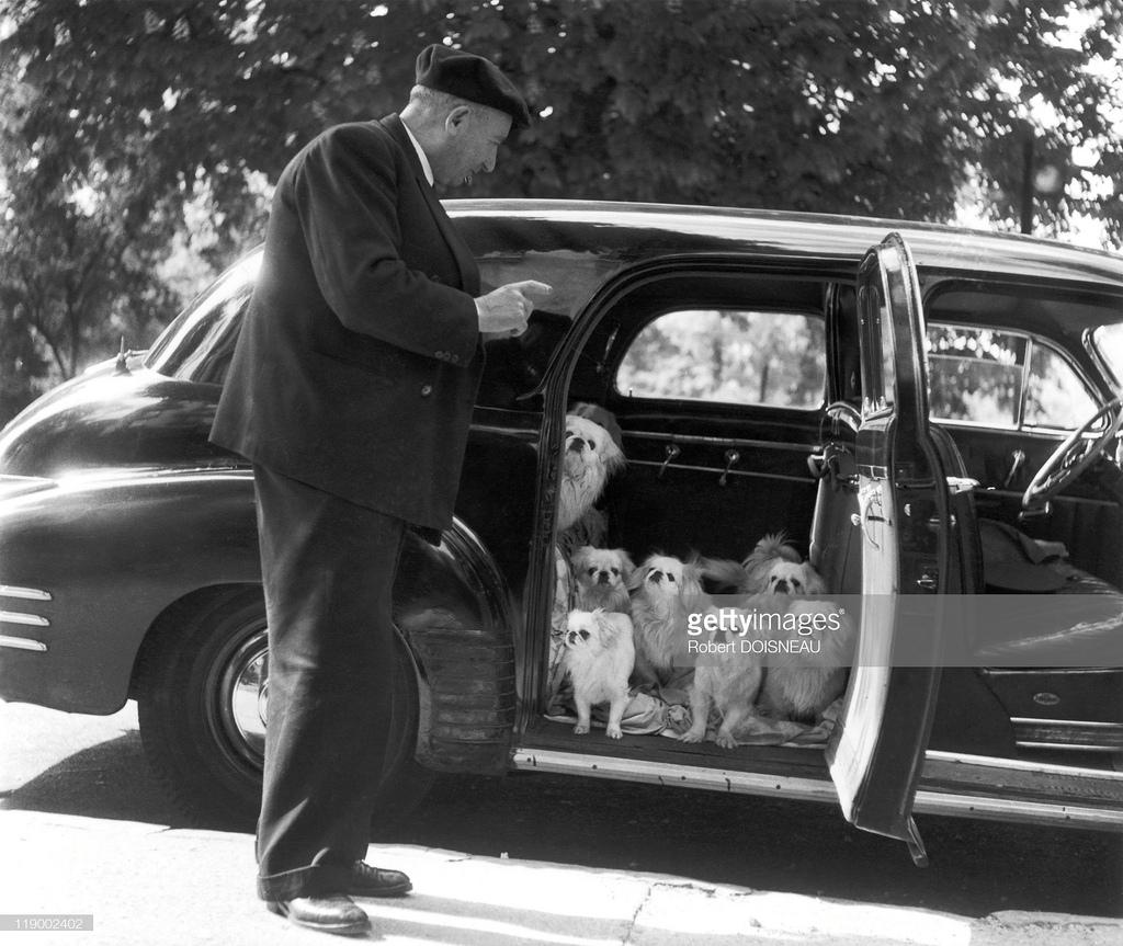 1953. Собаки маркиза де Куеваса