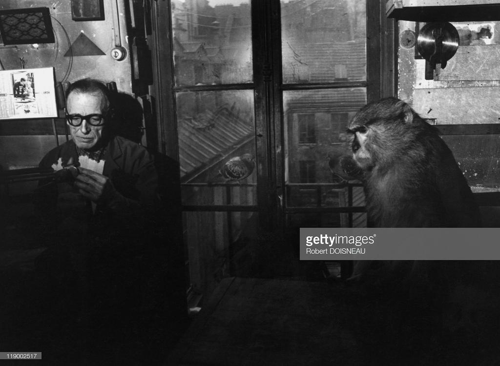1970. Мистер Байез и его обезьяна