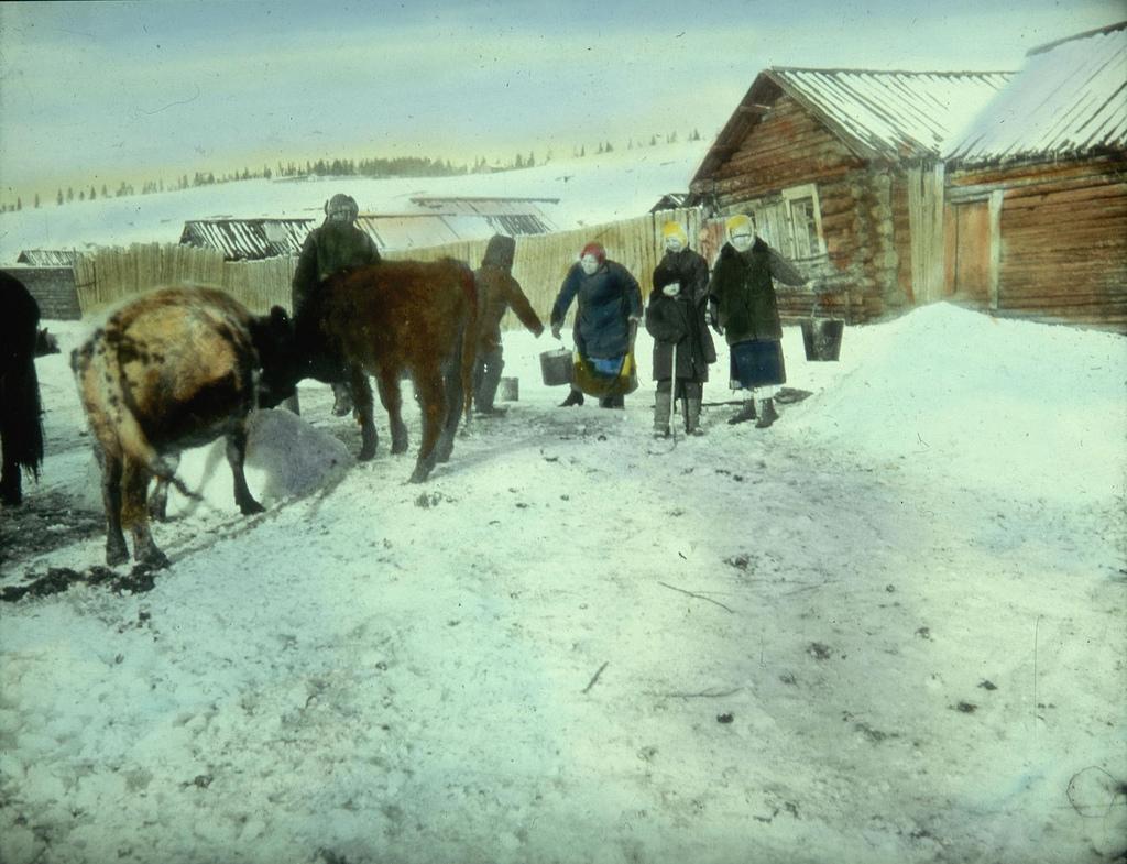 Крестьяне кормят скот зимой, сооружая кормушки из льда и снега