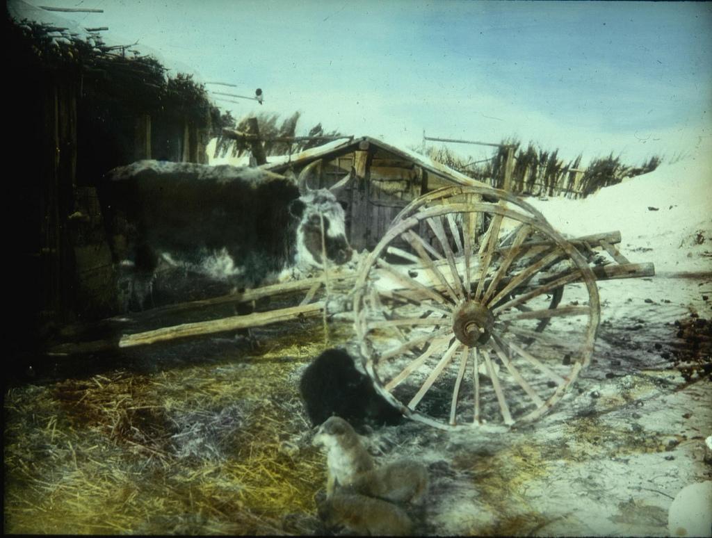 Старая телега на крестьянском дворе