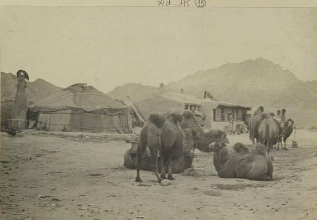 Наши верблюды отдыхают, 28 сентября
