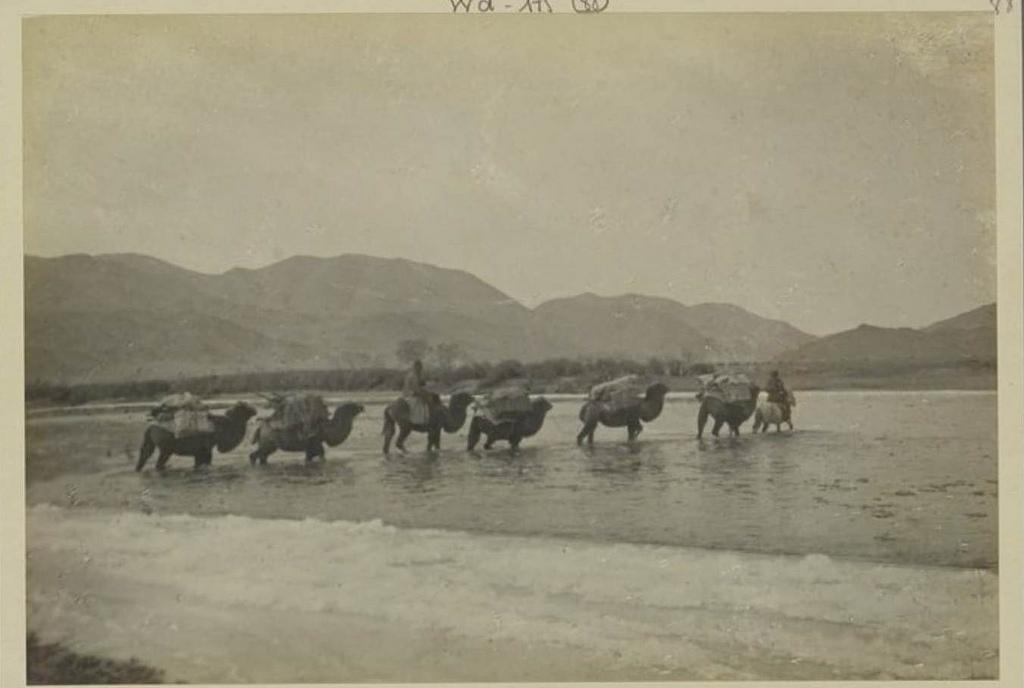 Наши верблюды проходят полузамерзший (-19 °) Кобдо Гол, 13 октября