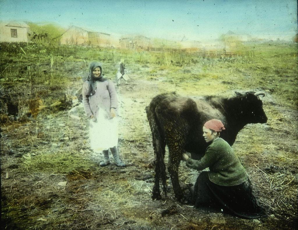 Крестьянка доит корову