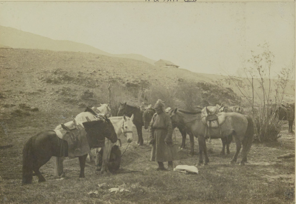 10. Лошади миссии, 13 июня
