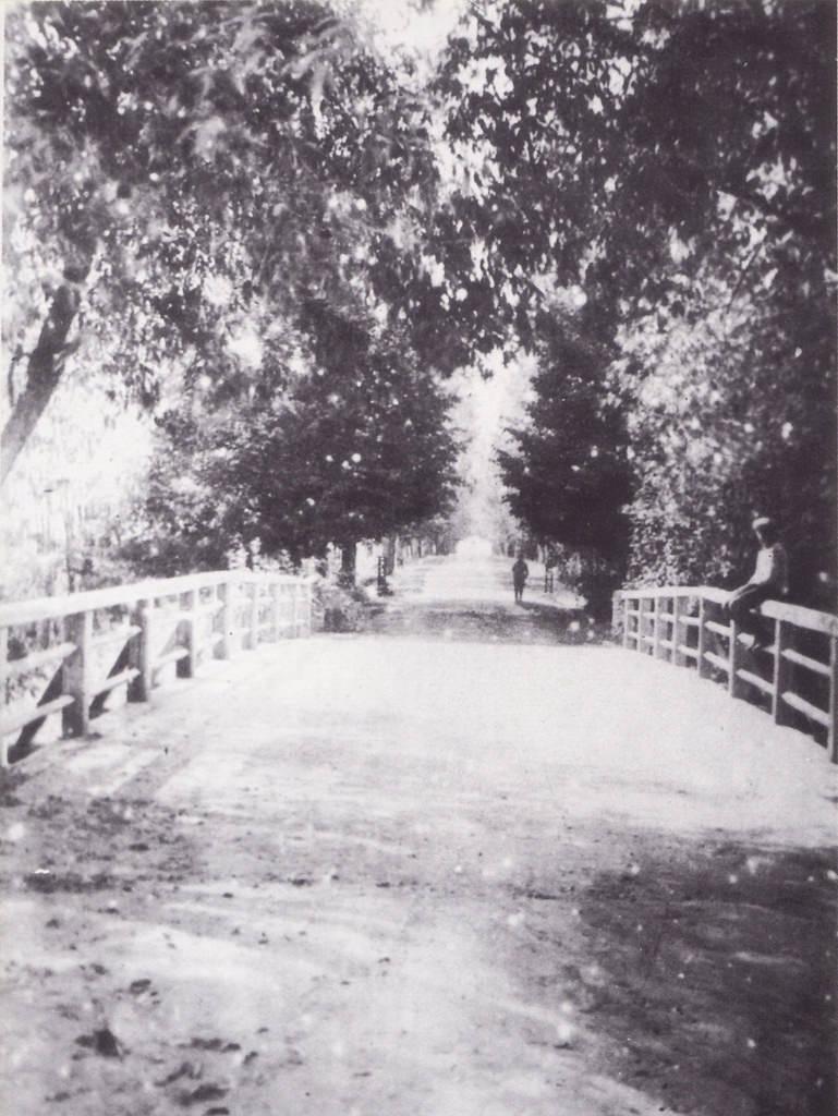 Дорога с Петербургского шоссе к усадьбе Патрикеева в селе Козьмодемьянском. 1911