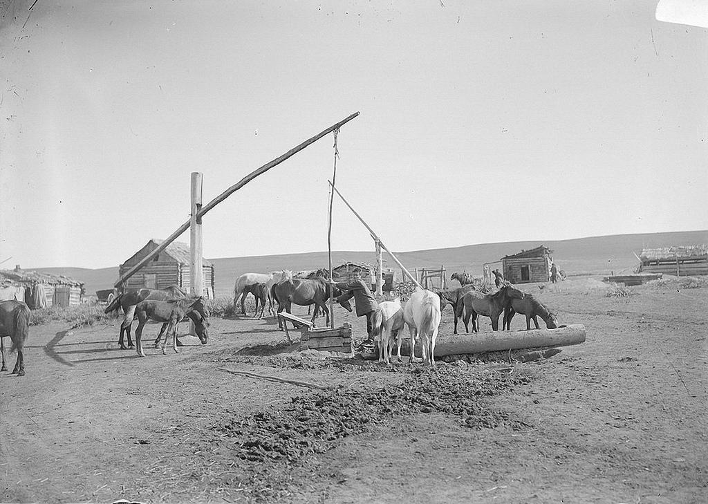Лошади у колодца