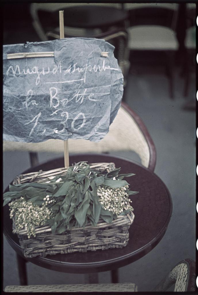 Лилии на продажу, май