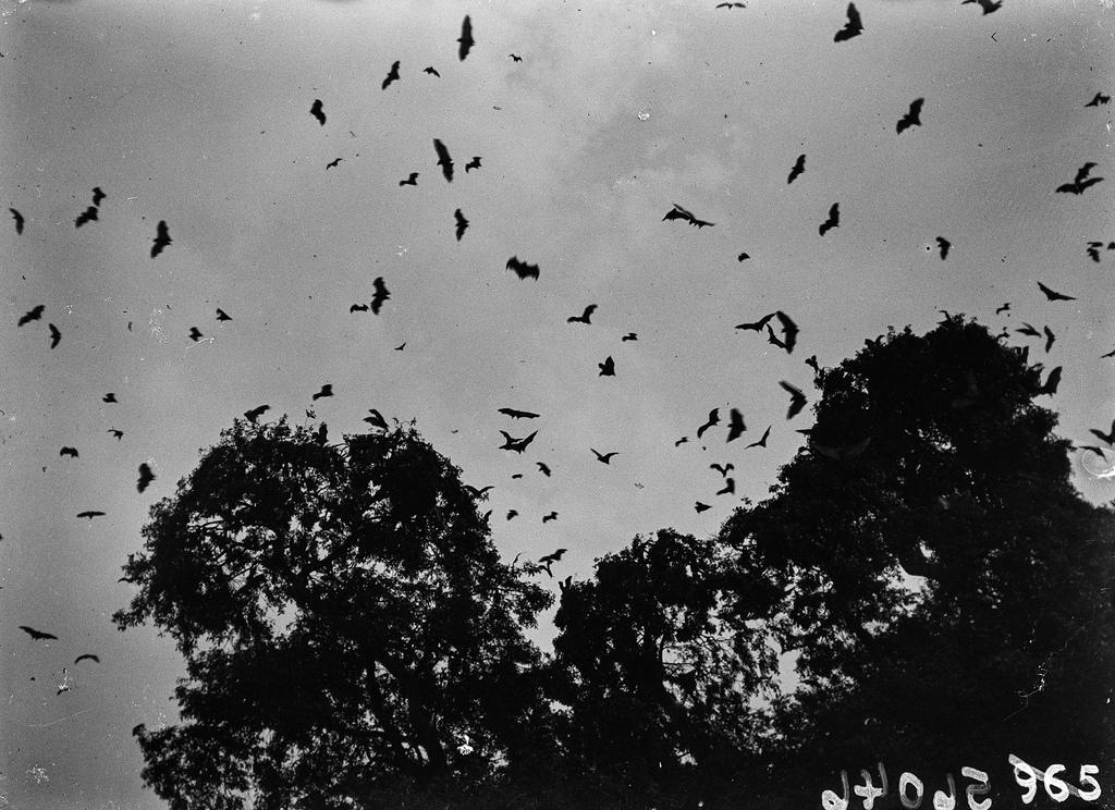 Открестности Катамбы. Летучие мыши