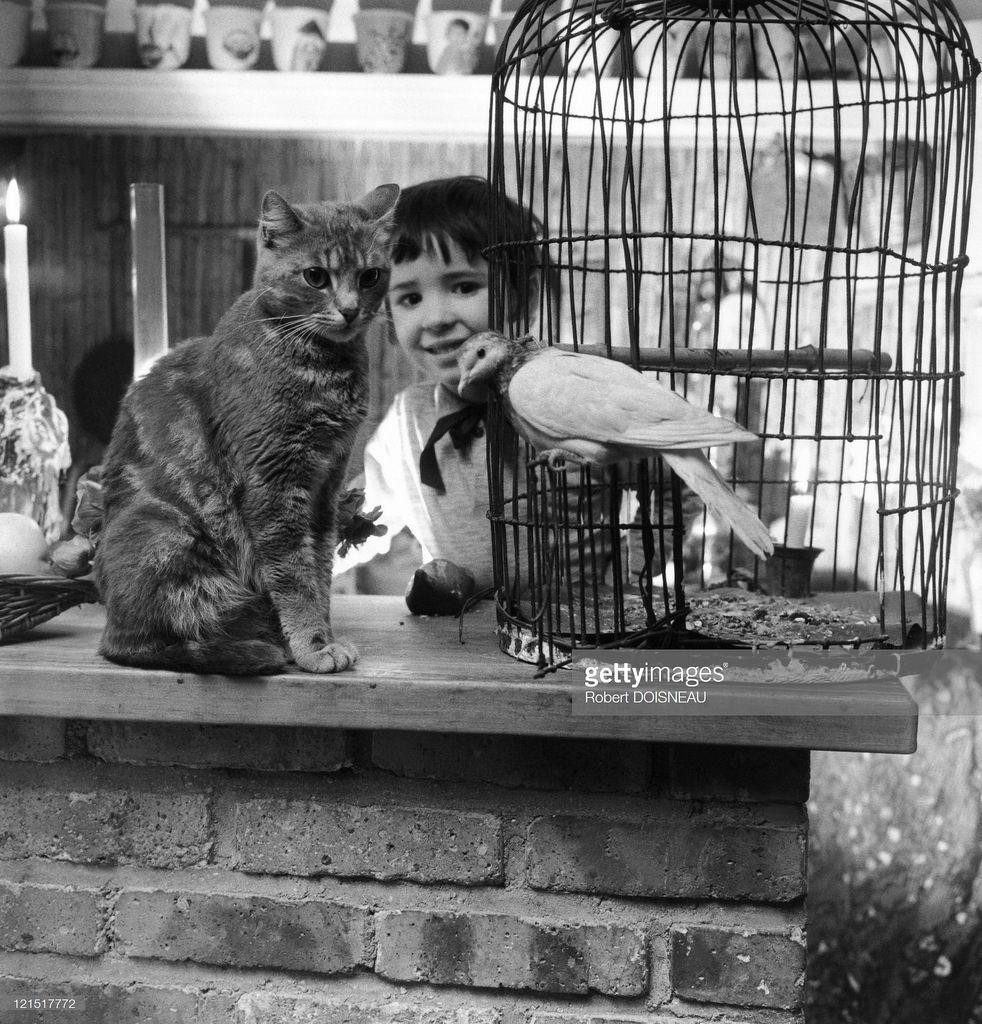 1950-е. Портрет ребенка с кошкой и птицей. Париж