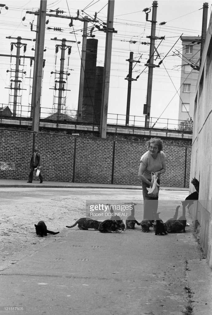 1950-е. Сен-Дени. Женщина и кошки