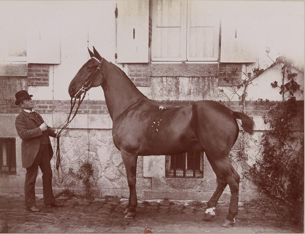 Английский конь и месье Уэл