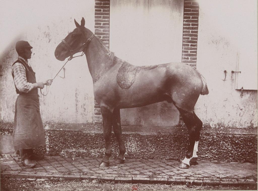Пони и Графд'Абиньи