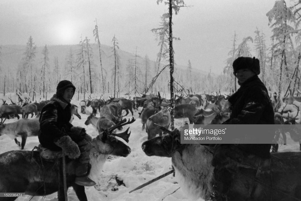 Сибирь. Два якутских пастуха ведут свои стада оленей в сторону тайги