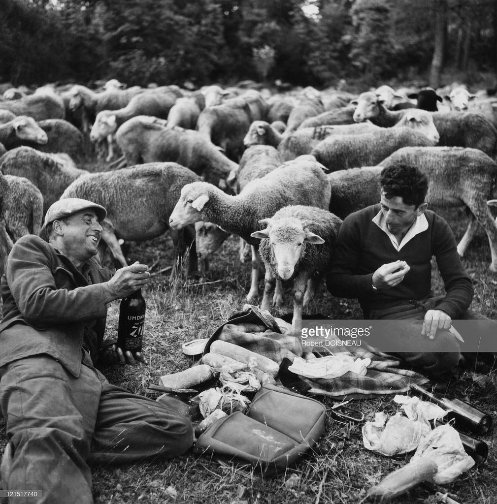 1950. Пастуший обед
