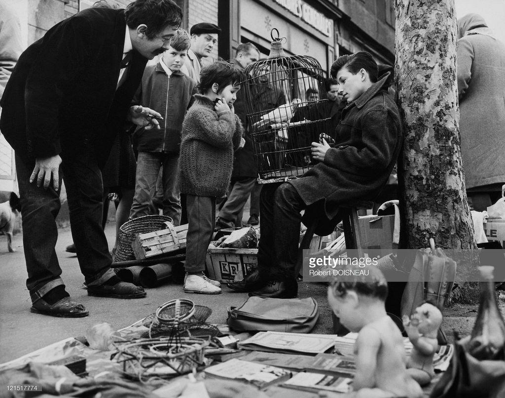 1950. Покупка голубя