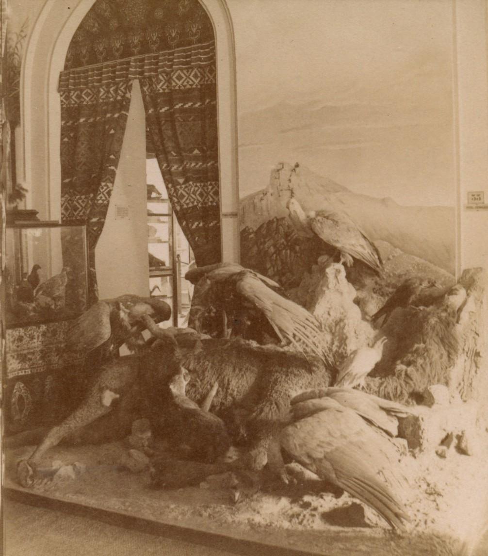 Музей. Стервятники, растерзавшие добычу